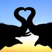 ESPECIAL: Animais de estimação parte III